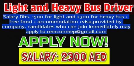 Light and Heavy Bus Driver Required